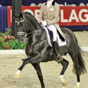 Die 10 teuersten Pferde der Welt