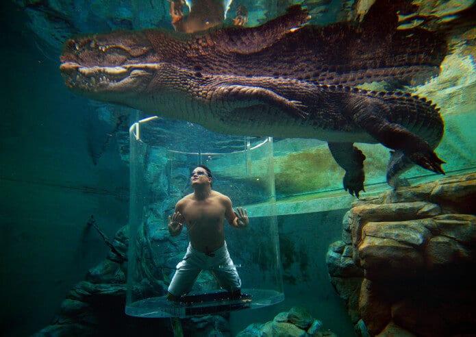Crocosaurus Cove Darwin City Australien