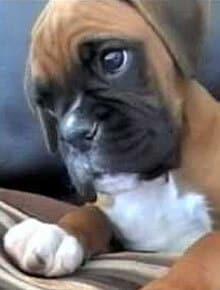 Hätten Sie's gewusst? 10 interessante Fakten über Hunde