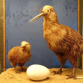 Die 10 größten Eier der Welt