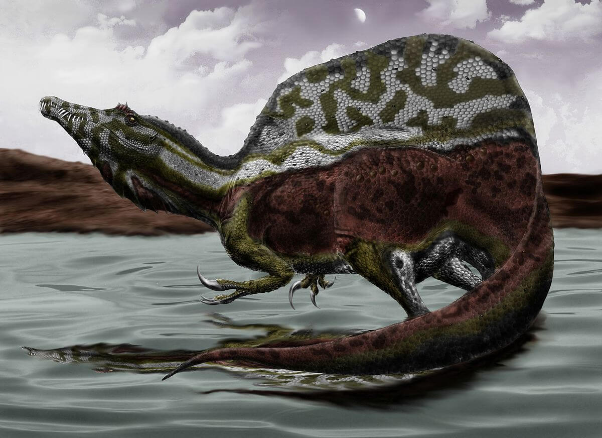 Von Durbed - http://durbed.deviantart.com/art/Spinosaurus-Aegyptiacus-287547465, CC BY-SA 3.0, Link