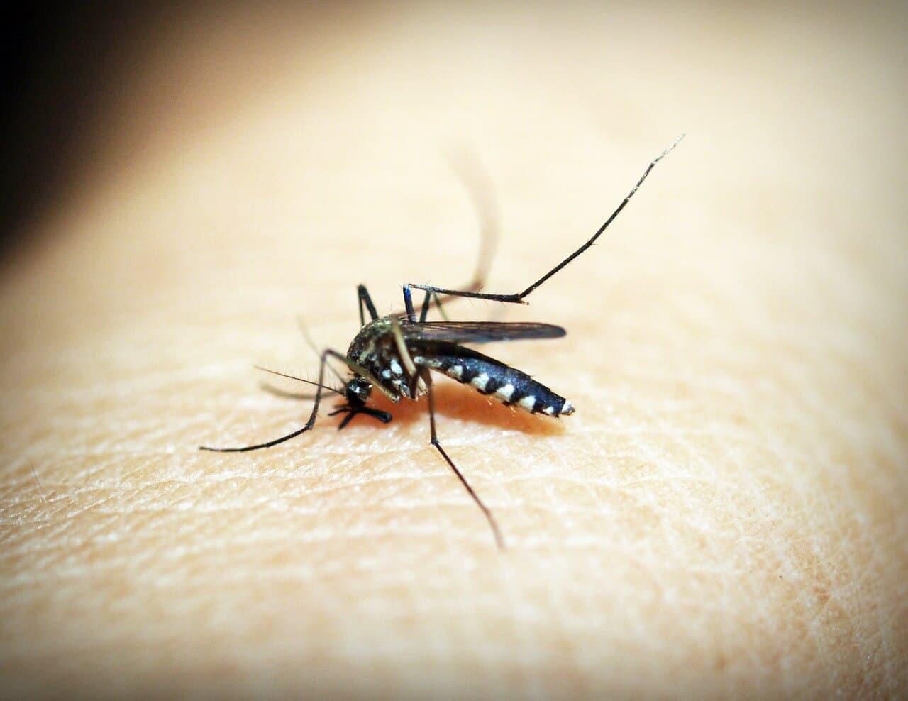 Die 10 größten Seuchen der Welt