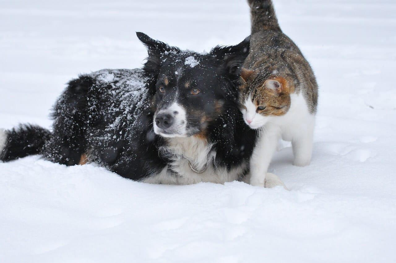 Hund, Katze