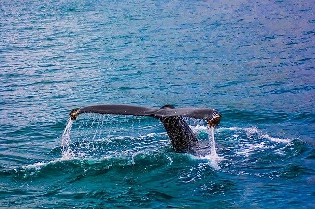 Die 10 größten Tiere der Welt