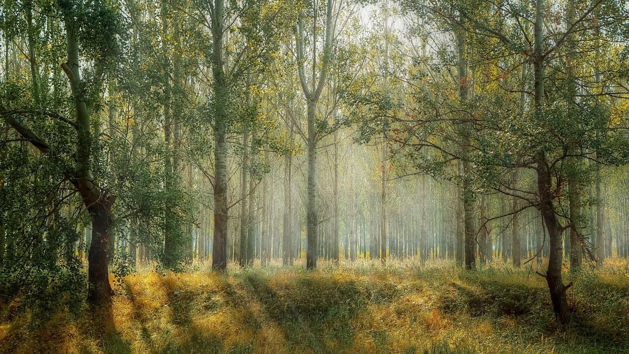 Die 10 größten Wälder der Welt