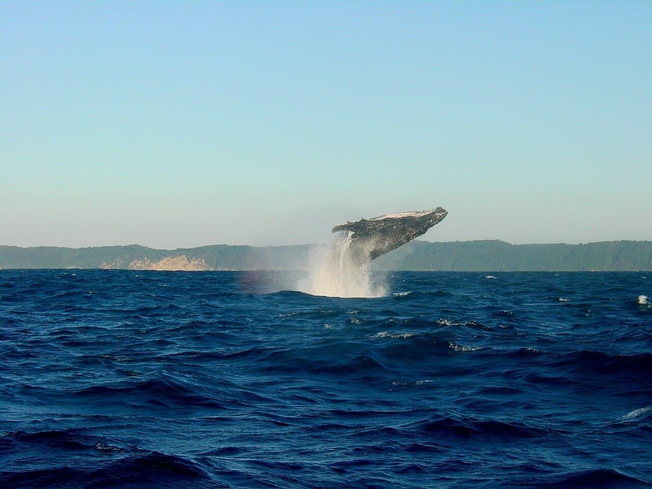 Die 10 größten Meere der Welt