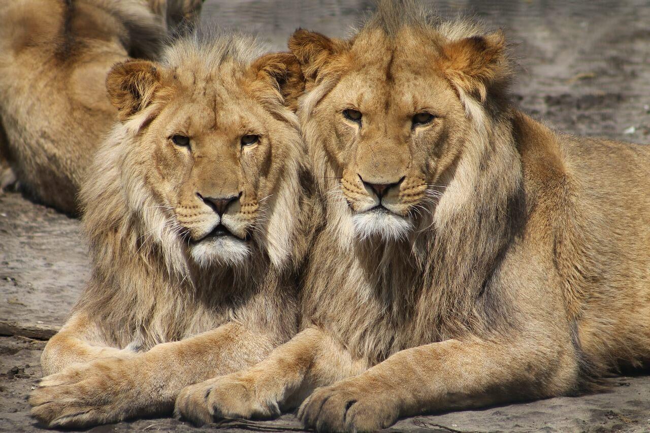 Die 10 größten Zoos der Welt