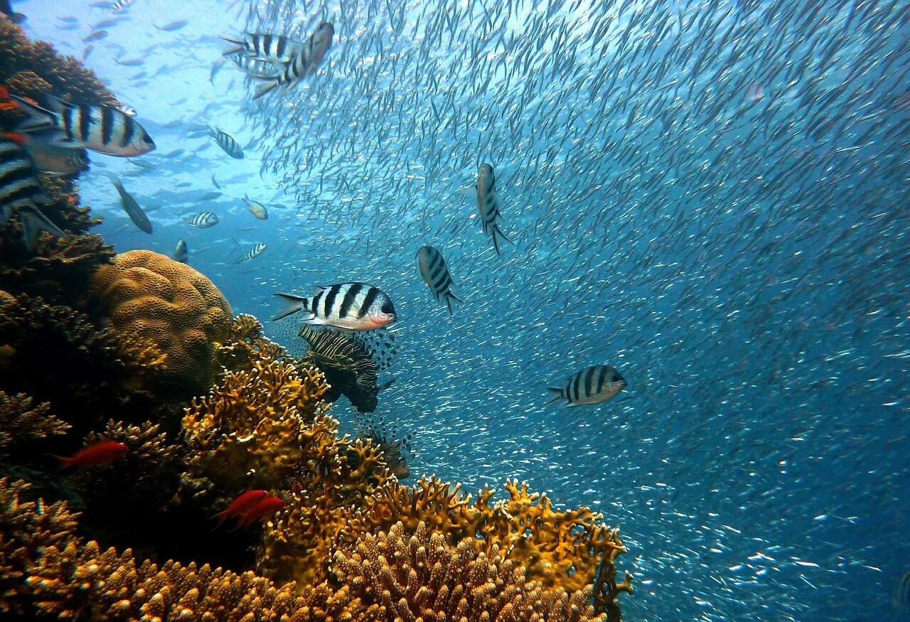 Die 10 größten Korallenriffe der Welt