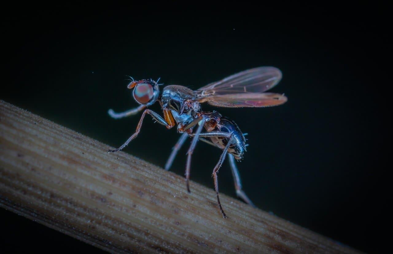 Ihh, was krabbelt denn da? – Die Top 5 der nervigsten Insekten