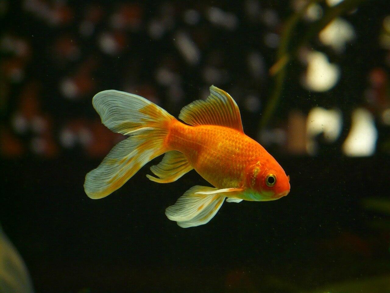 Krankheiten im Aquarium erkennen, behandeln und vermeiden – 10 Tipps