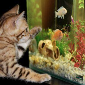 Ein Aquarium anschaffen – diese 10 Dinge sollte man unbedingt wissen