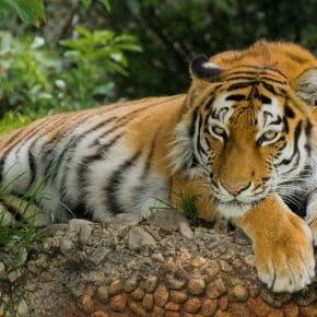 10 aussterbende Tierarten