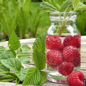 10 Wege wie die Gastronomie umweltfreundlicher wird