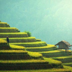 Ratgeber: So gelange ich an ein Visum für Kambodscha online