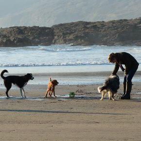 Die 10 schönsten Hundestrände in Deutschland