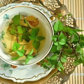 Die 10 besten Heilpflanzen für Beschwerden aller Art