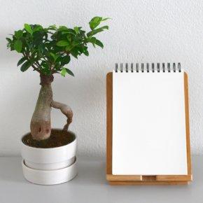Zimmerpflanzen sind langweilig? Dies sind die 10 skurrilsten Zimmerpflanzen