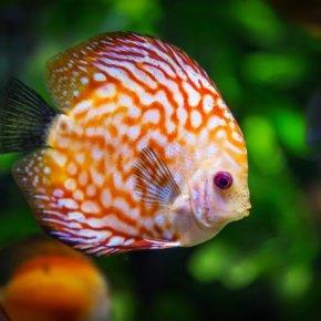 Kann ich meine alten Aquarien und anderen Heimtierzubehör noch zu Geld machen?