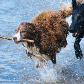 Die Top 10 beliebtesten Hunderassen