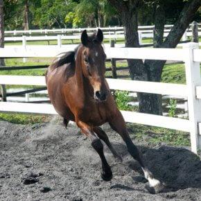 Die zehn wichtigsten Produkte für ein Pferd